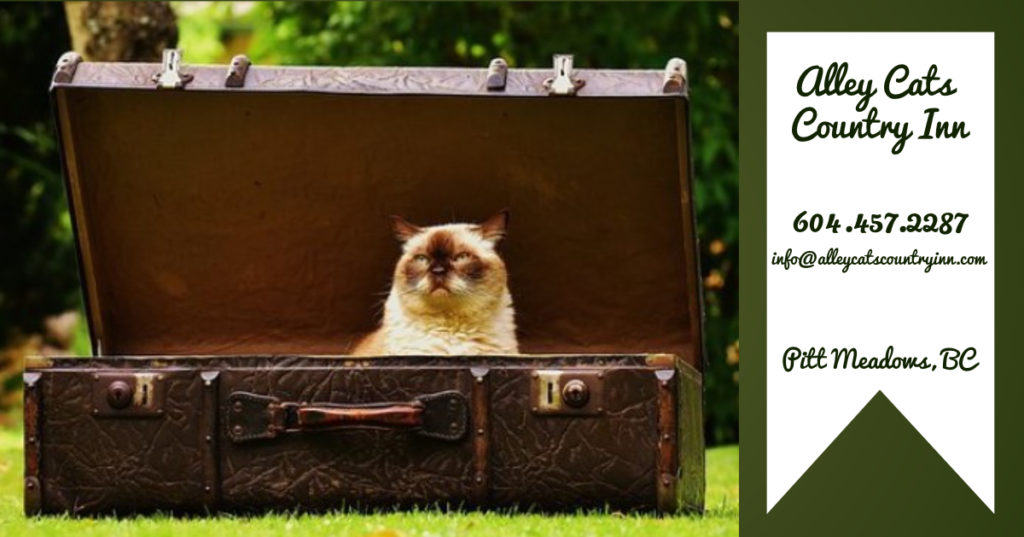 Alley Cats Country Inn Suitcase Travelling Cat